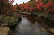 Pocono Stream in Fall Limited Edition Giclee